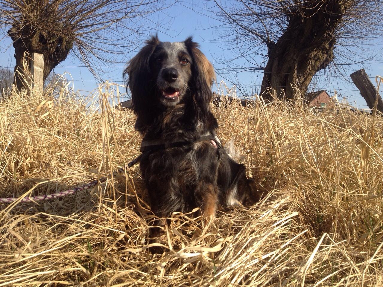 Zum Tag des Hundes: Augen auf beim Welpenkauf