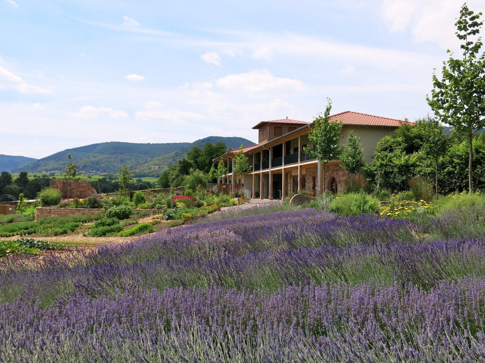 Lavendelfest im Kräutergarten Klostermühle – 11. /12. Juli