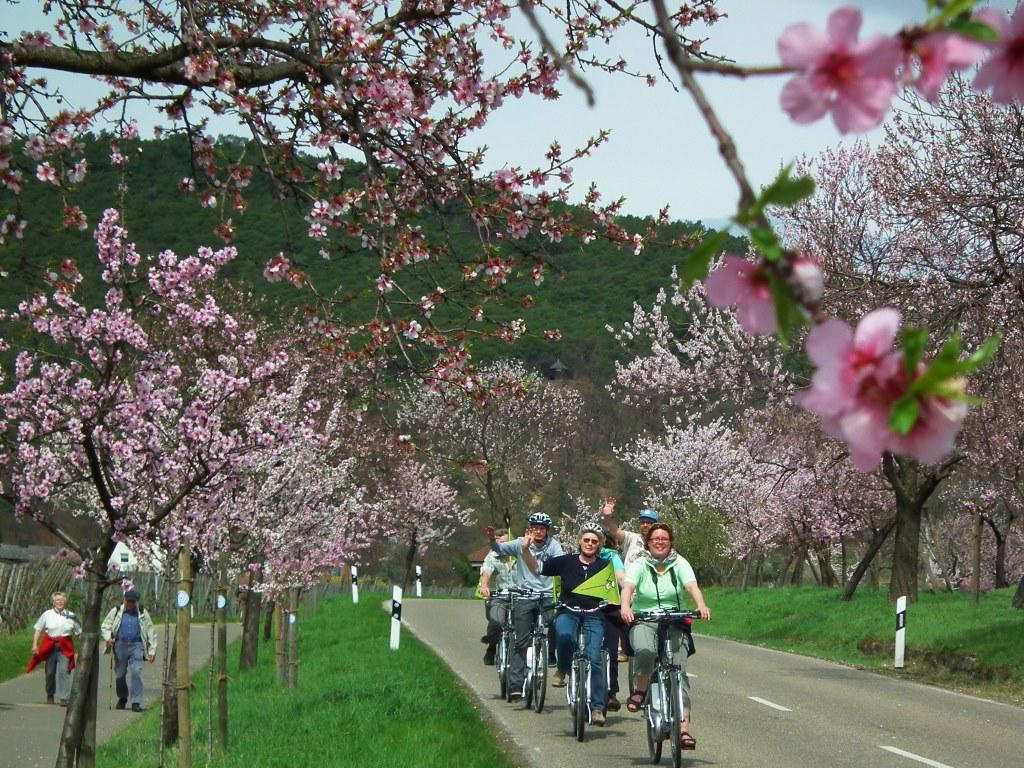 Pfalz f#xFCr  Einsteiger  und  Fortgeschrittene