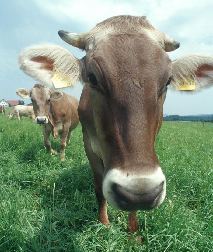 ??Biomilch bringt Vielfalt in die Sommerk#xFCche