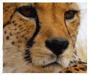 Einstieg in die Klassische Homöopthie für Tierärzte