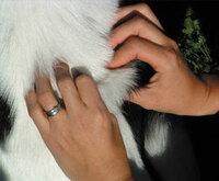 Fortbildung für Tierätze / innen - Kleintiere