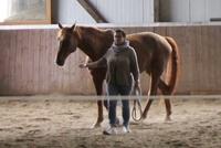 Pferdegestützte Führungsteams Seminare .   Warum 3 Mal die selbe Begegnung Pferd-Mensch erleben?