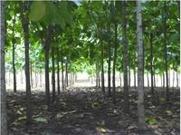 Life Forestry Standort Ecuador: Wo Teakholzanbau Königsdisziplin ist