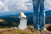 Hundefreundliche Routen & Gastgeber