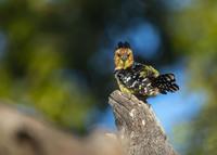 Die weltweite Biodiversitätskrise gefährdet unsere Existenzgrundlagen