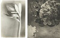 Poesie der Pflanze