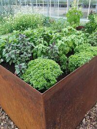 Gemüse für Hochbeet, Balkon, Terrasse