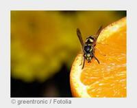 Das wird ein Wespen-Sommer