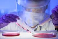 GATC Biotechs MYCOPLASMACHECK verschafft Gewissheit in der Zellkulturforschung