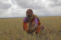 Über 10 Millionen Menschen von Hunger bedroht